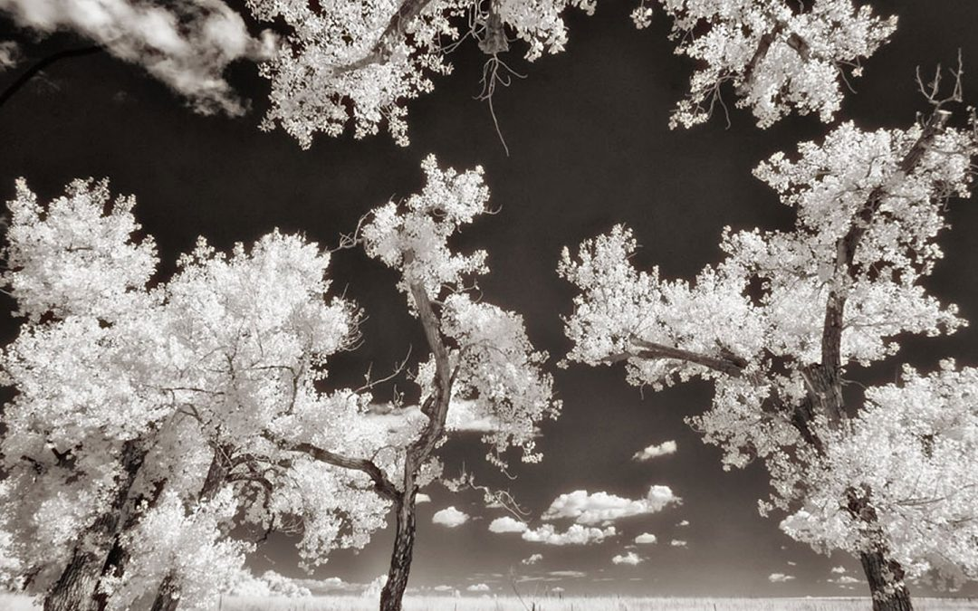 Some Thoughts About Converting a Camera for Infrared