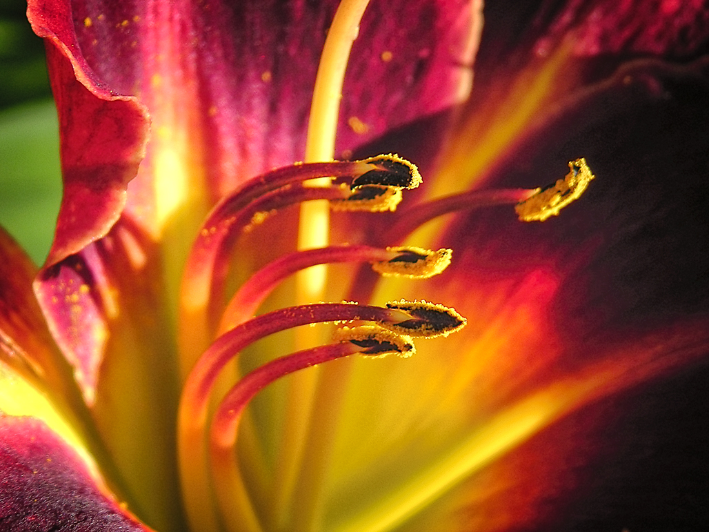 Macro with a  Point & Shoot Camera?