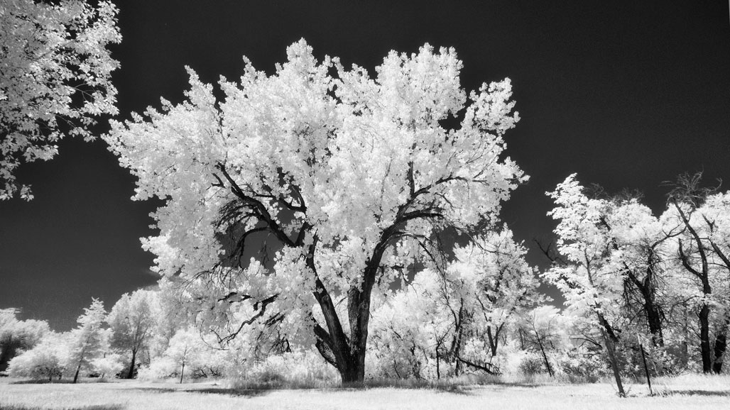 Infrared Shooting with the DG Leica Zoom