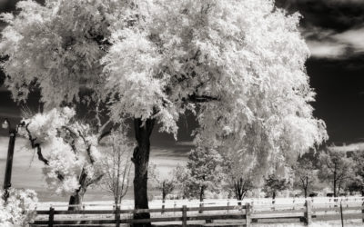 A Few Exposure Tips for Digital Infrared