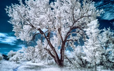 How to Produce the Blue Sky Infrared Technique
