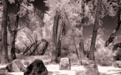 How Important Is White Balance in Infrared Photography?