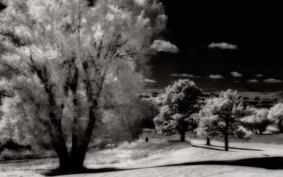dans la nuit: From RAW Color to Monochrome Infrared