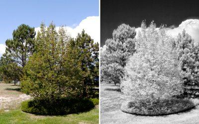 Exploring Mirrorless Infrared Capture Options