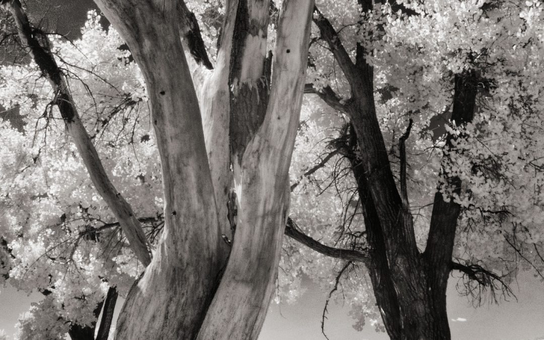 Shooting Infrared with Leica's 12mm MFT Lens