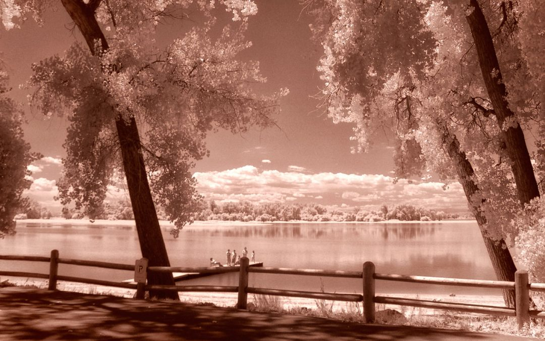 Musings on Filters for Infrared Photography